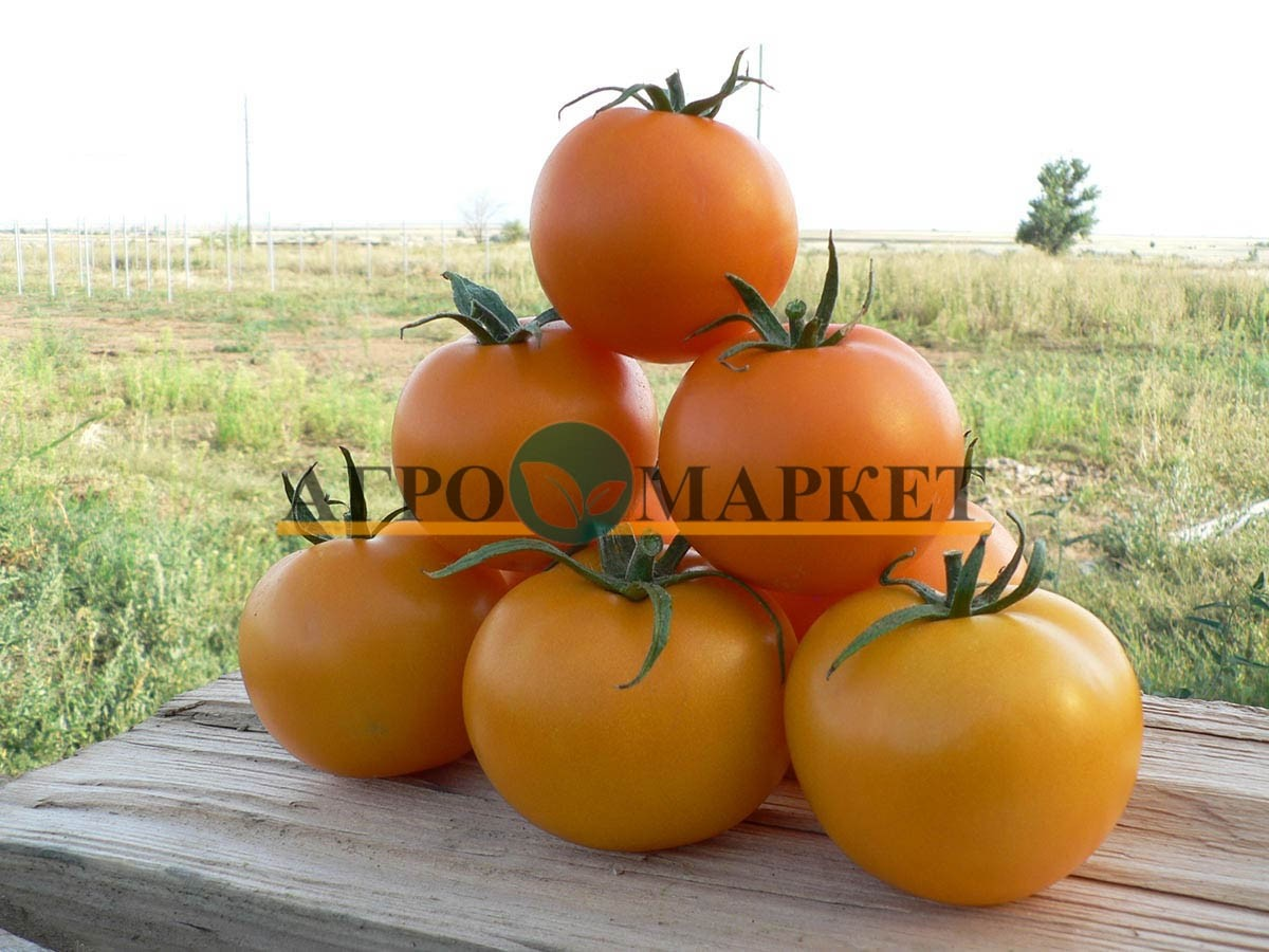 Томат ГОЛД F1 / GOLD F1 Quality Seeds  фото 5