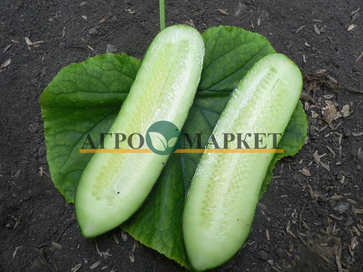 Огурец КАРОЛИНА F1 / KAROLINA F1 Quality Seeds  фото 5