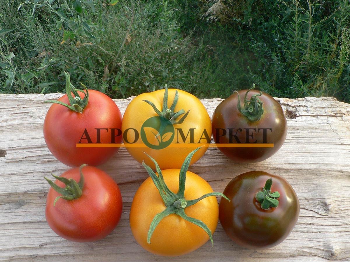 Томат ГОЛД F1 / GOLD F1 Quality Seeds  фото 6