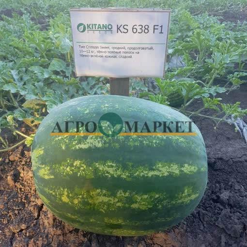 Арбуз KS 638 F1 Kitano Seeds
