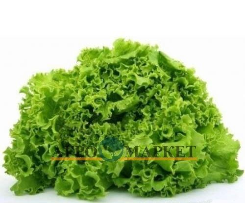 Салат листовой ГРАНИТ / GRANIT Nunhems