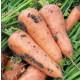 Морковь РЕД КОР (упаковка 50 грамм) Sakata